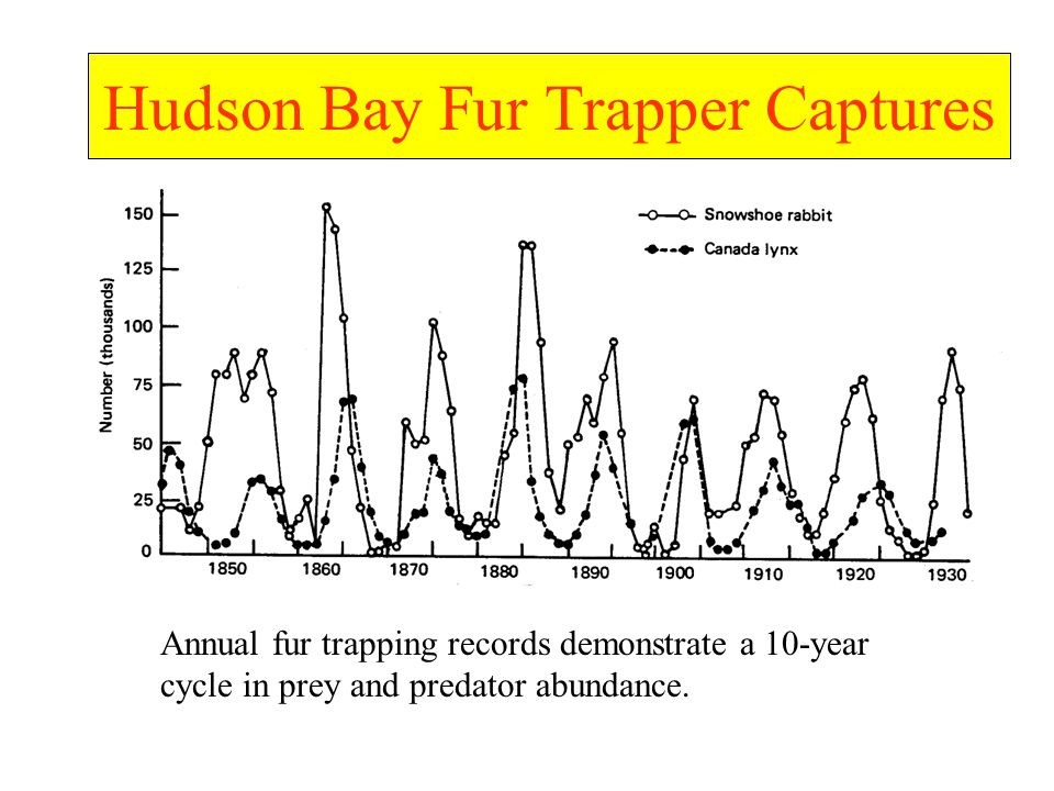 Hudson Bay Fur Trapper Captures Annual fur trapping records demonstrate a 10-year cycle in prey and predator abundance.