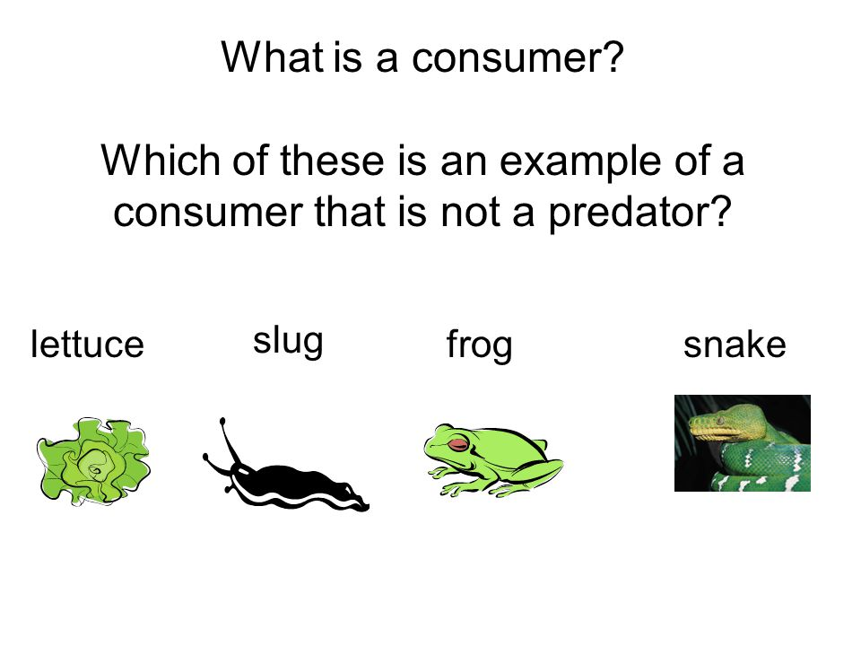 What is a consumer. Which of these is an example of a consumer that is not a predator.