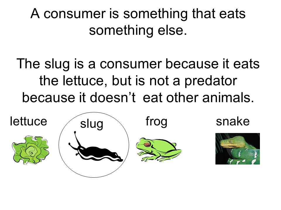 A consumer is something that eats something else. The slug is a consumer because it eats the lettuce, but is not a predator because it doesn't eat oth