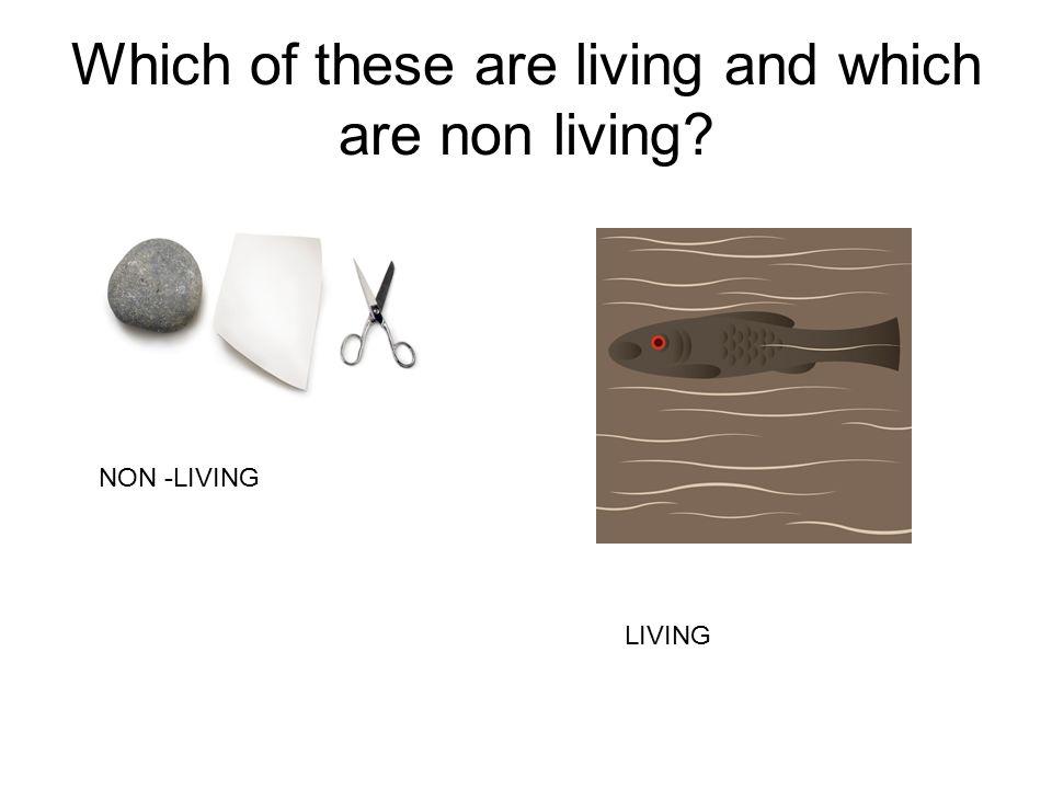 NON -LIVING LIVING