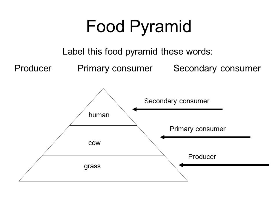 Food Pyramid Label this food pyramid these words: Producer Primary consumer Secondary consumer human cow grass Secondary consumer Primary consumer Pro