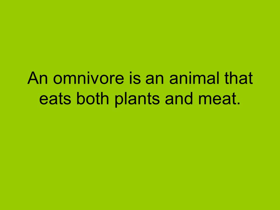 An omnivore is an animal that eats both plants and meat.