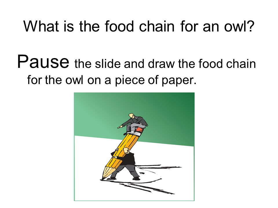What is the food chain for an owl? Pause the slide and draw the food chain for the owl on a piece of paper.