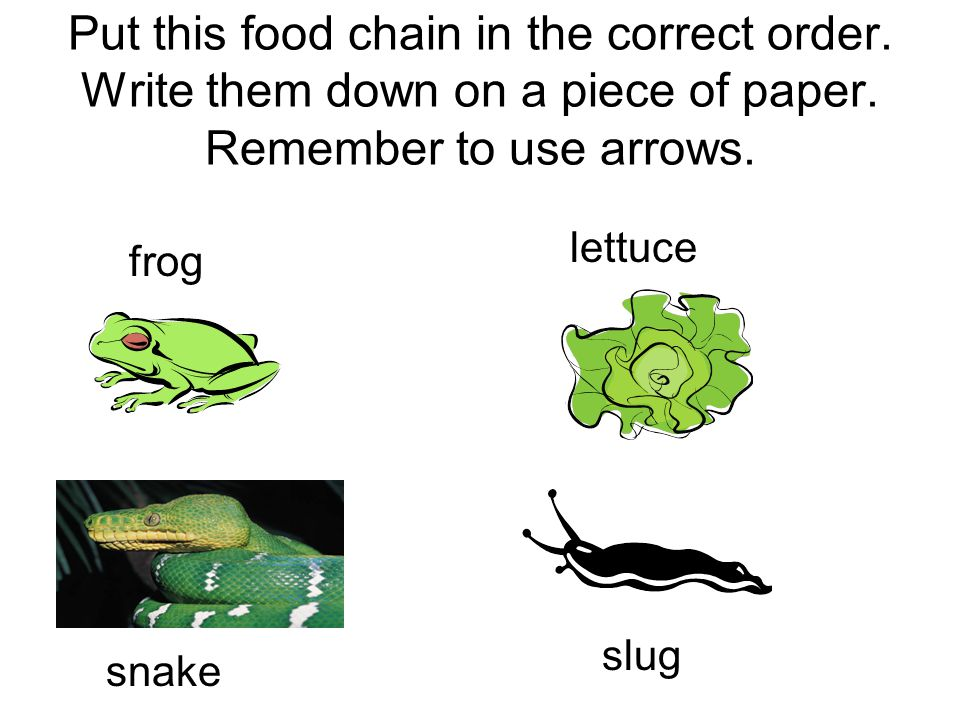 Put this food chain in the correct order.Write them down on a piece of paper.
