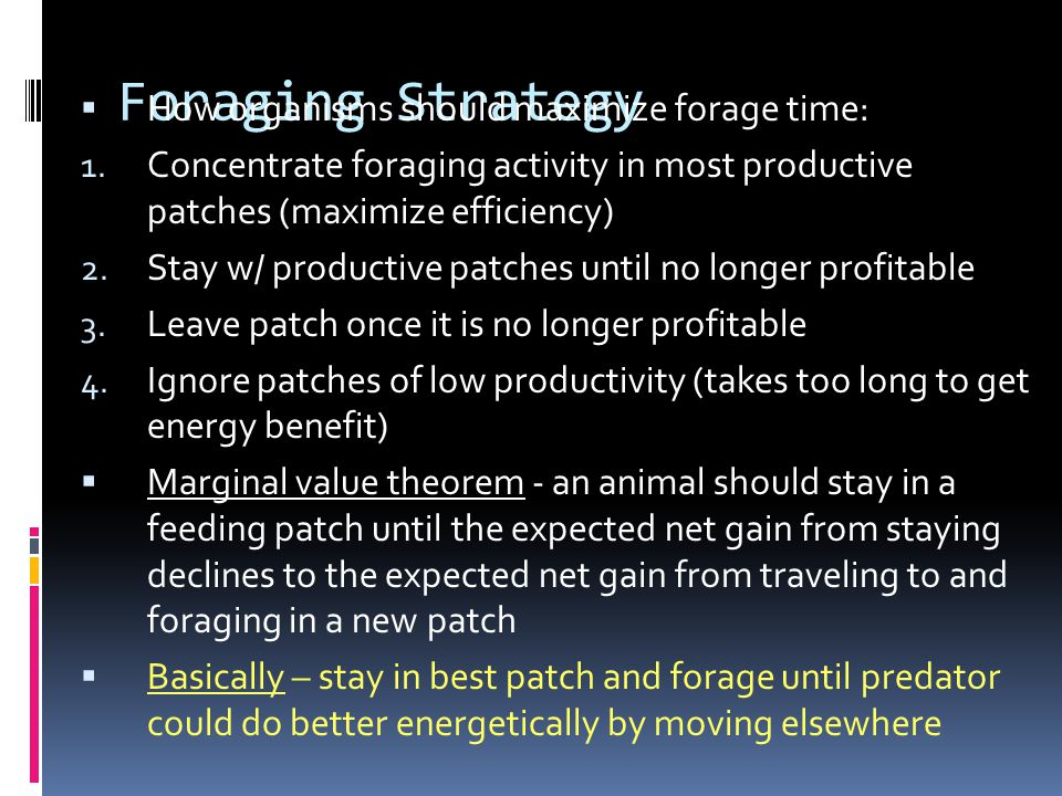 Foraging Strategy  How organisms should maximize forage time: 1.