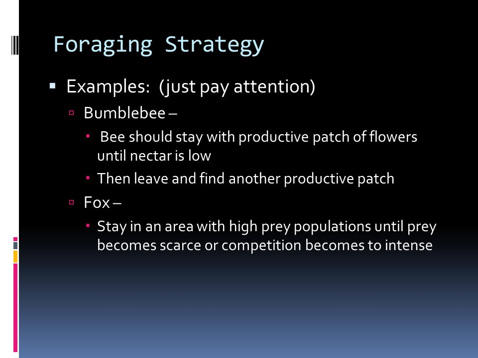 Foraging Strategy  Examples: (just pay attention)  Bumblebee –  Bee should stay with productive patch of flowers until nectar is low  Then leave and find another productive patch  Fox –  Stay in an area with high prey populations until prey becomes scarce or competition becomes to intense