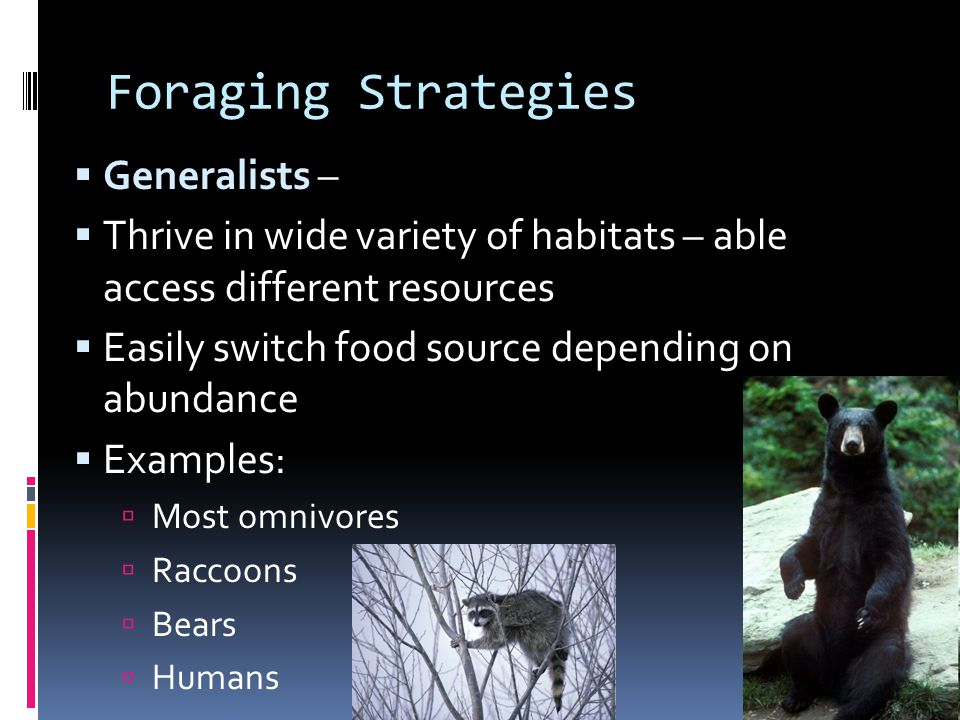 Foraging Strategies  Generalists –  Thrive in wide variety of habitats – able access different resources  Easily switch food source depending on ab