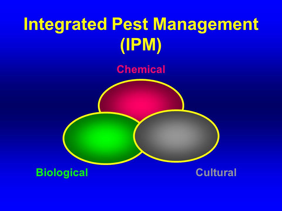 NOTES: There are numerous bacteria that can infect and kill insects.