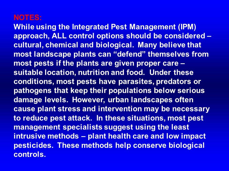 Bigeyed bugs are common predators of turf infesting pests, like chinch bugs.