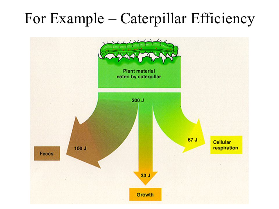 For Example – Caterpillar Efficiency