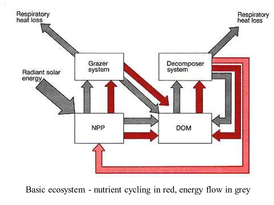 Basic ecosystem - nutrient cycling in red, energy flow in grey