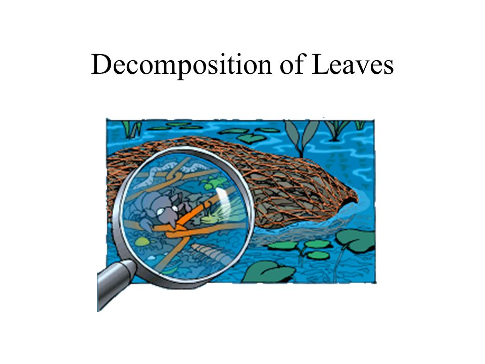 Decomposition of Leaves