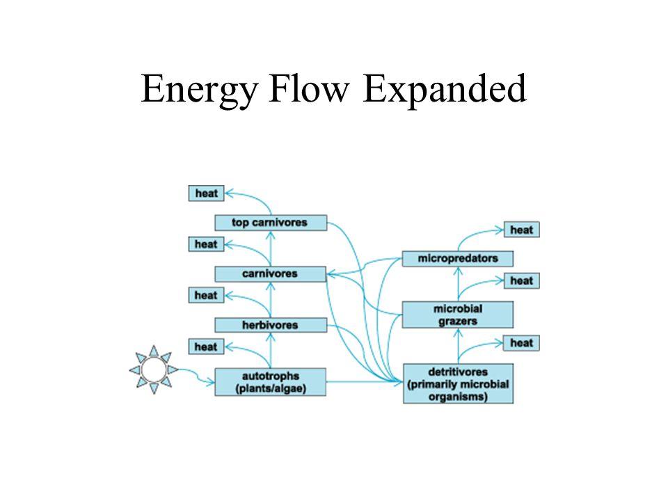 Basic Energy Flow