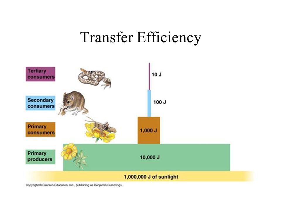 10% Rule for Transfer Efficiency