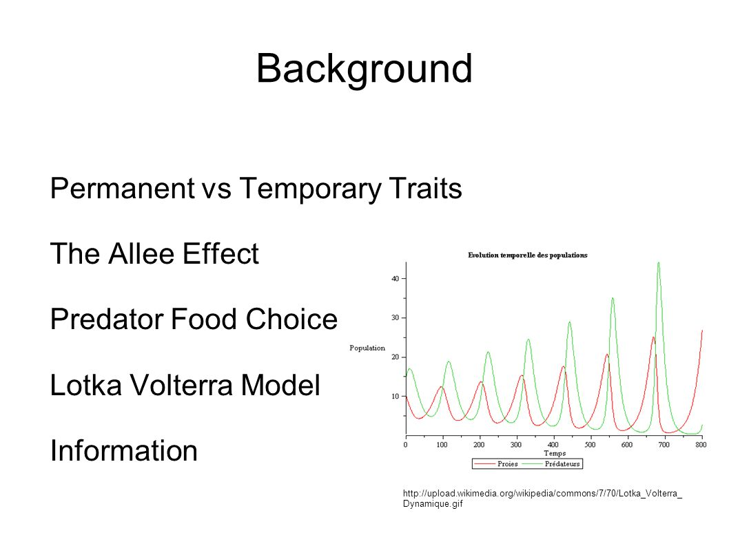 Background Permanent vs Temporary Traits The Allee Effect Predator Food Choice Lotka Volterra Model Information http://upload.wikimedia.org/wikipedia/commons/7/70/Lotka_Volterra_ Dynamique.gif