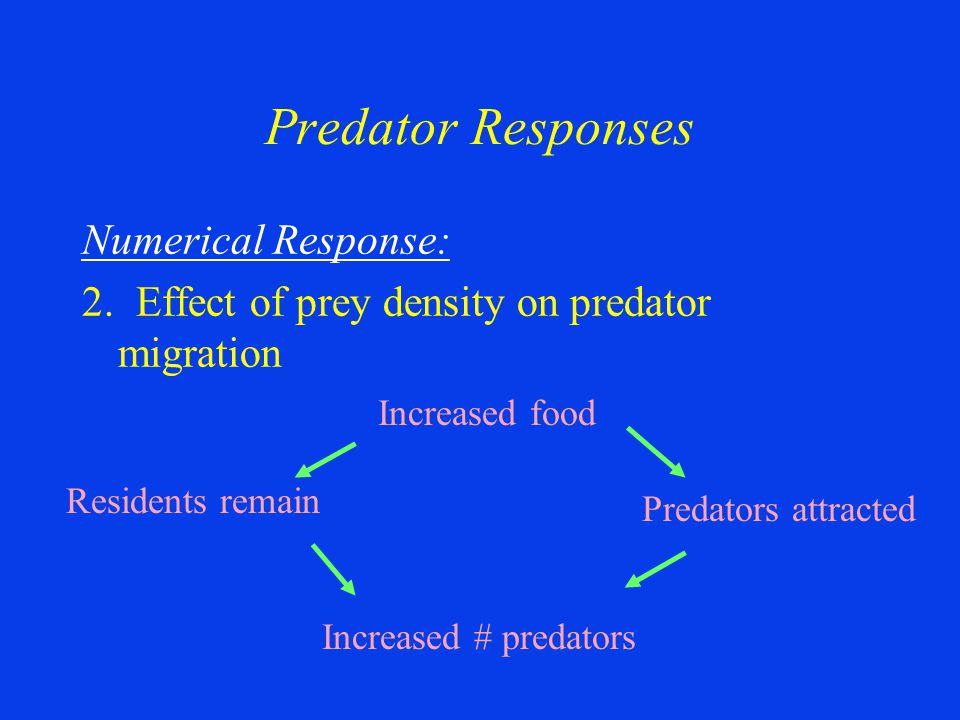 Numerical Response: 2. Effect of prey density on predator migration Predator Responses Increased food Increased # predators Predators attracted Reside