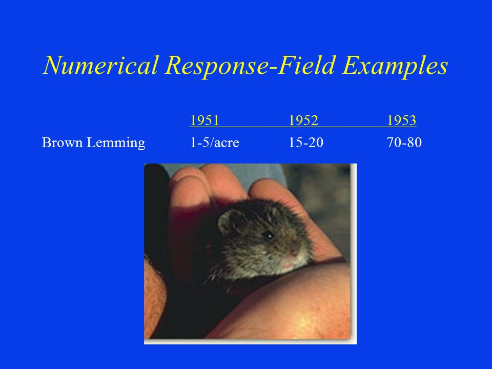 195119521953 Brown Lemming1-5/acre15-2070-80 Numerical Response-Field Examples