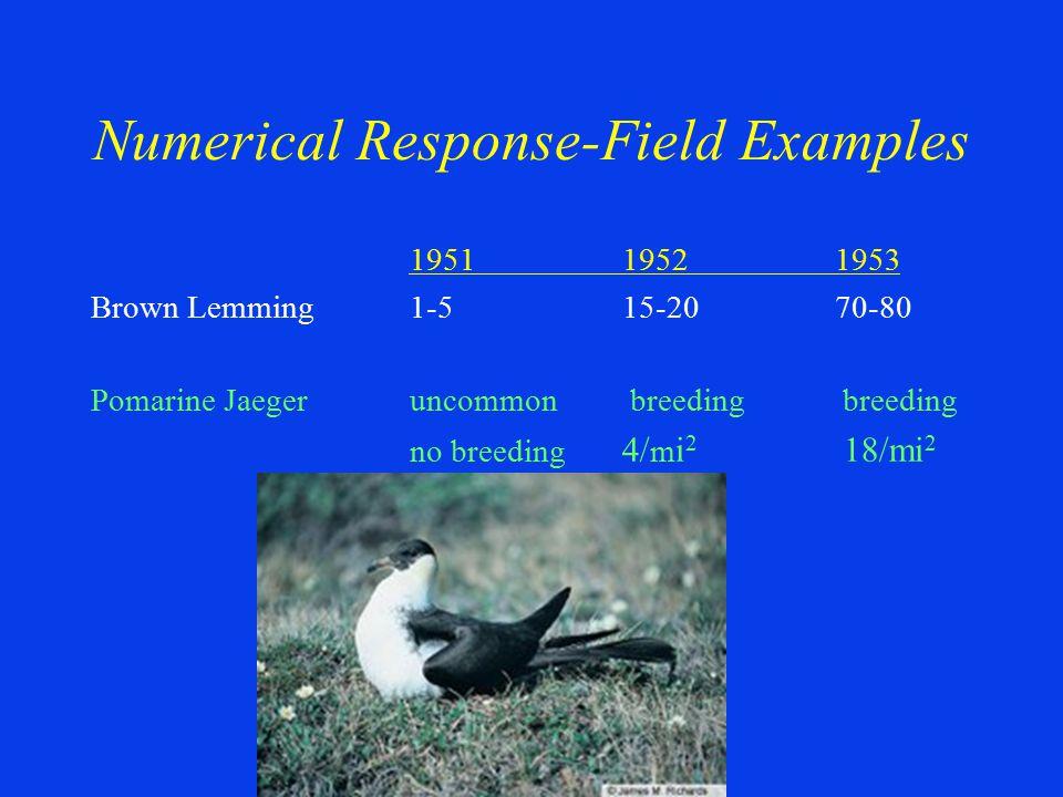 195119521953 Brown Lemming1-515-2070-80 Pomarine Jaegeruncommon breeding breeding no breeding 4/ m i 2 18/mi 2 Numerical Response-Field Examples