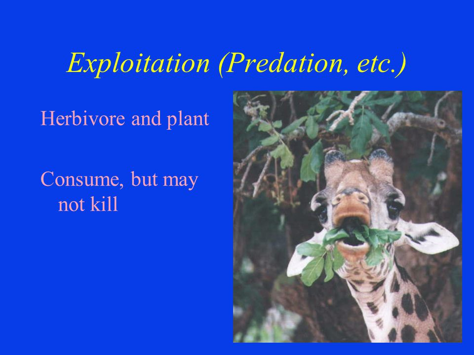 Exploitation (Predation, etc.) Herbivore and plant Consume, but may not kill