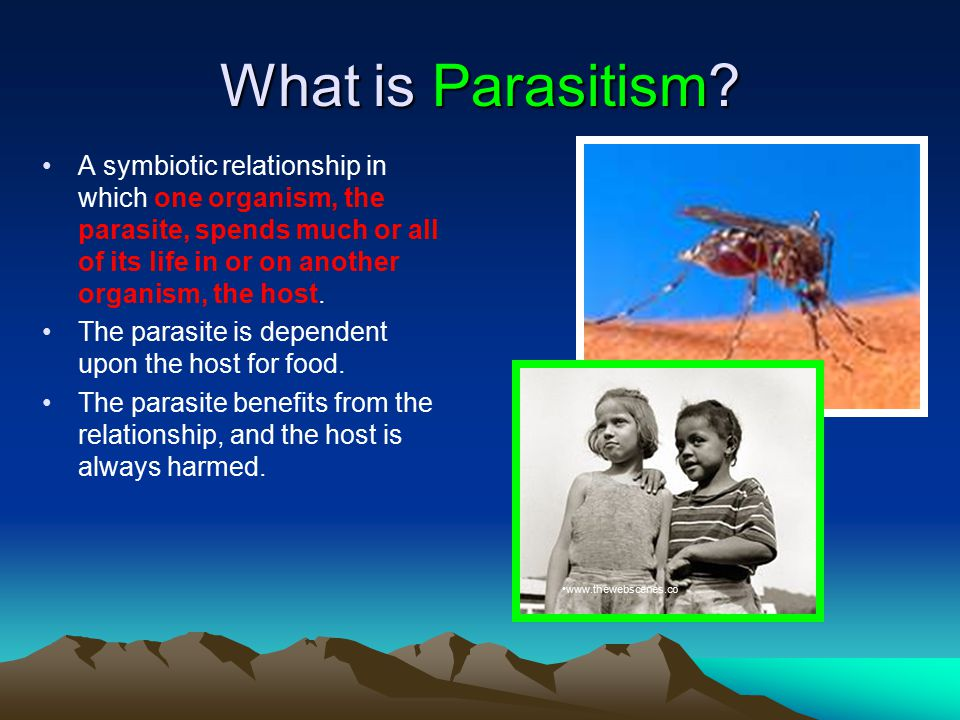 What is Parasitism.