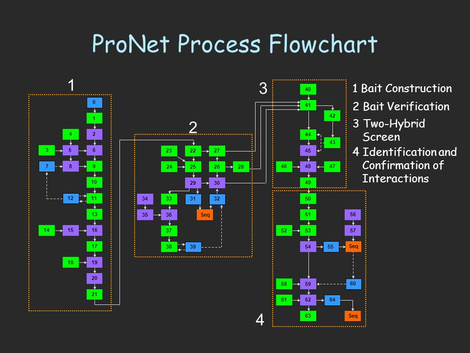 ProNet Process Flowchart 1 0 2 6 10 11 13 17 9 1615 5 19 20 21 25 29 24 3536 38 18 41 27 43 45 49 50 54 62 4846 5352 5958 47 63 61 60 30 7 8 3 12 14 34 39 57 56 32 37 51 22 4 42 33 44 40 28 23 64 55 31 26 Seq 1 2 3 4 1 Bait Construction 2 Bait Verification 3 Two-Hybrid Screen 4 Identification and Confirmation of Interactions