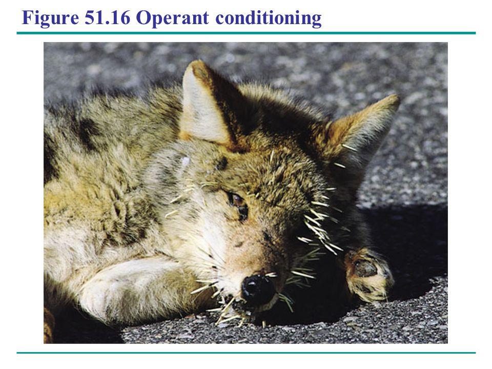 Figure 51.16 Operant conditioning