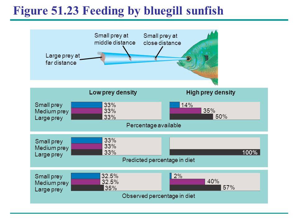 Figure 51.23 Feeding by bluegill sunfish Low prey densityHigh prey density 33% 32.5% 35% 2% 40% 57% 100% 50% 35% 14% 33% Small prey Medium prey Large