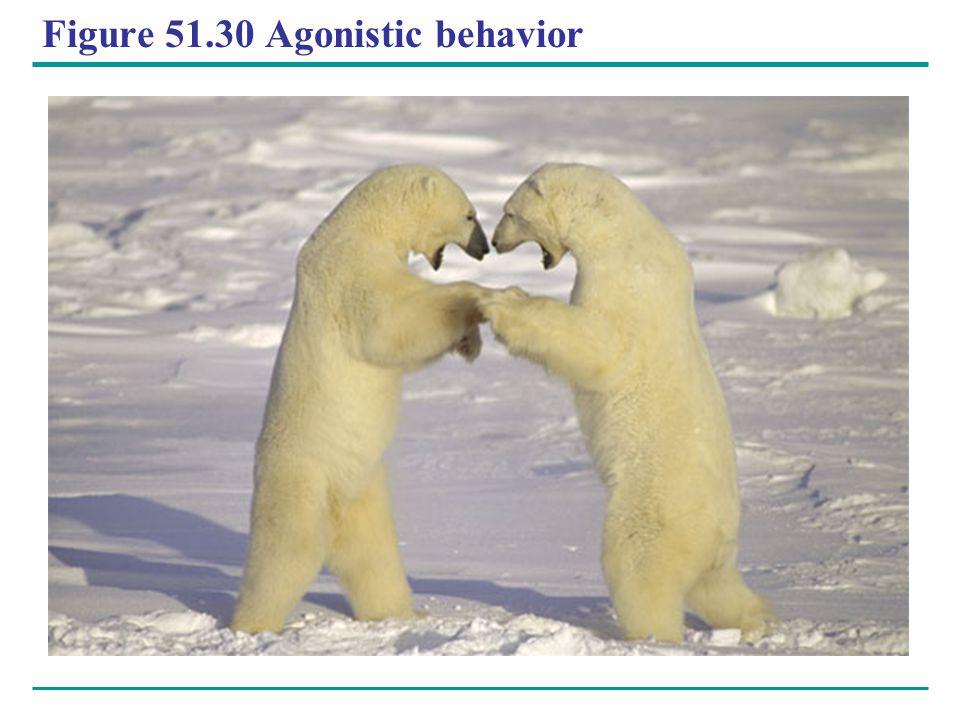 Figure 51.30 Agonistic behavior