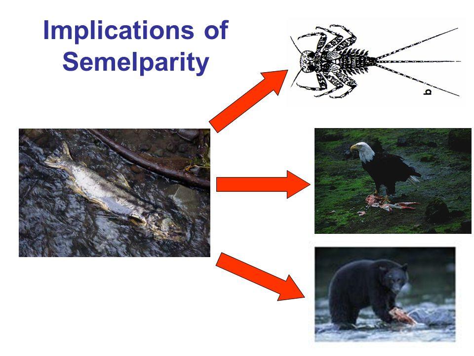 Implications of Semelparity