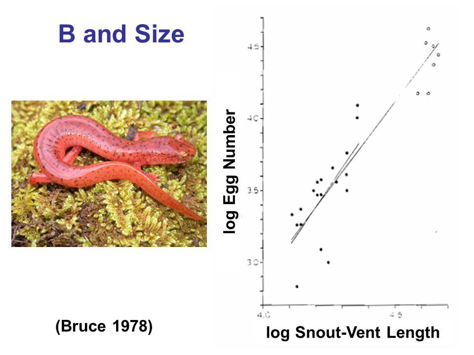 B and Size log Egg Number log Snout-Vent Length (Bruce 1978)