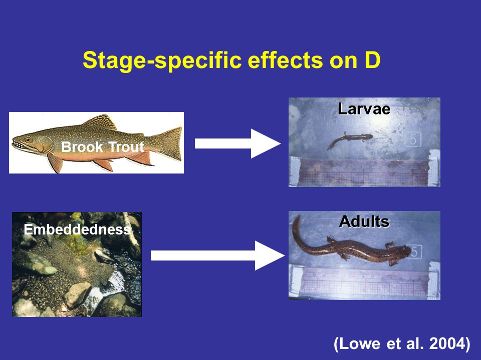 Stage-specific effects on D Larvae Gyrinophilus Adults Adults (Lowe et al.