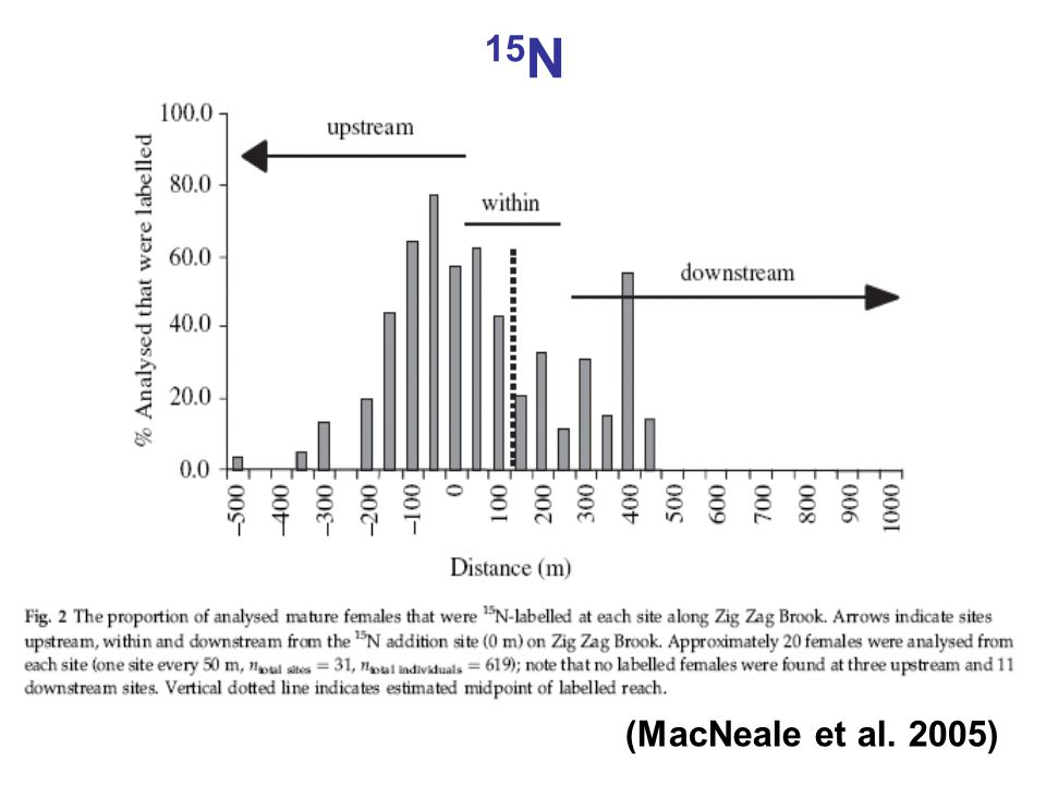 (MacNeale et al. 2005)