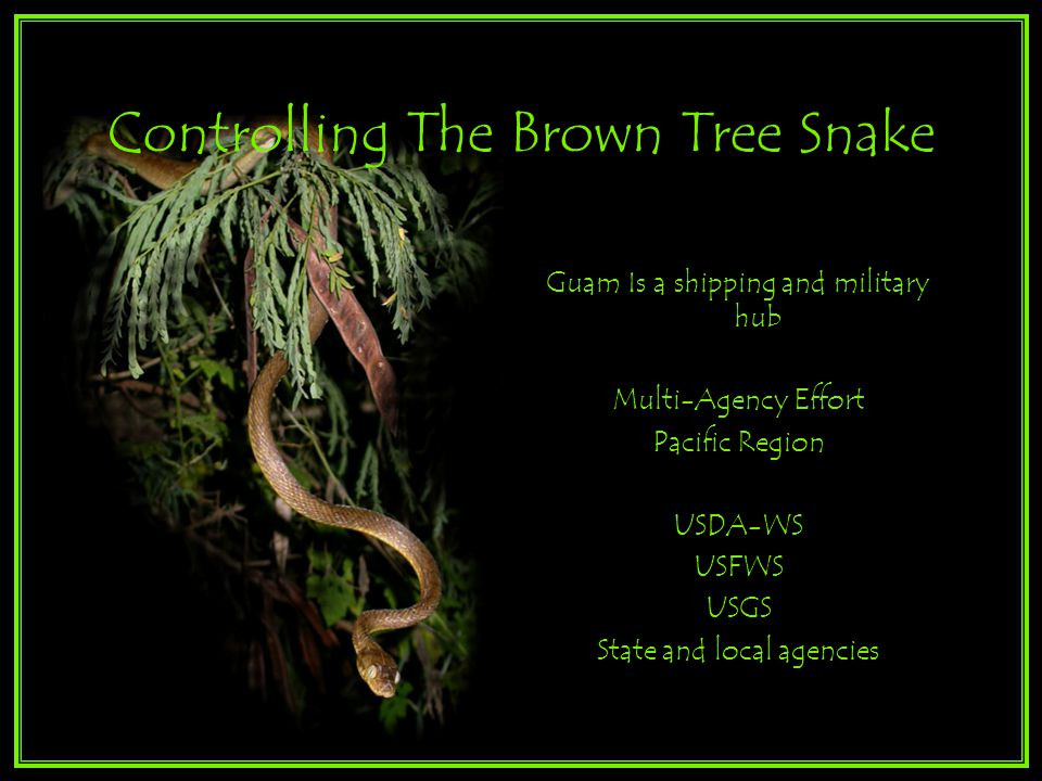 Controlling The Brown Tree Snake Guam Is a shipping and military hub Multi-Agency Effort Pacific Region USDA-WS USFWS USGS State and local agencies