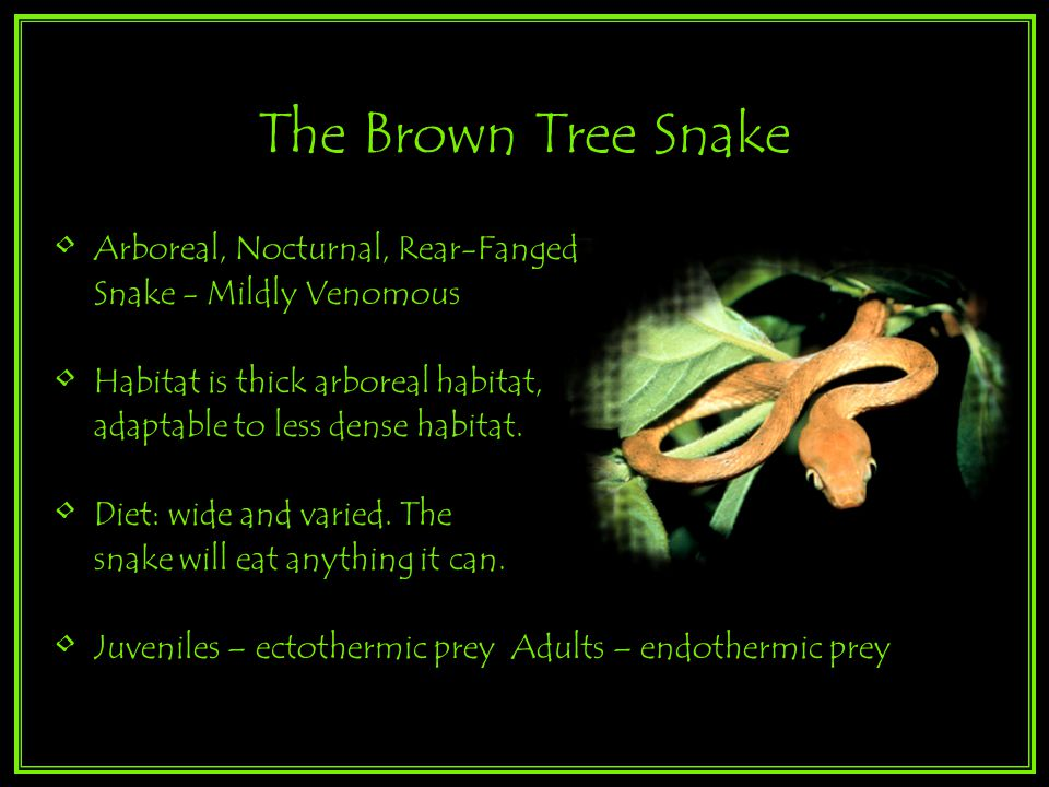 Arboreal, Nocturnal, Rear-Fanged Snake - Mildly Venomous Habitat is thick arboreal habitat, adaptable to less dense habitat.