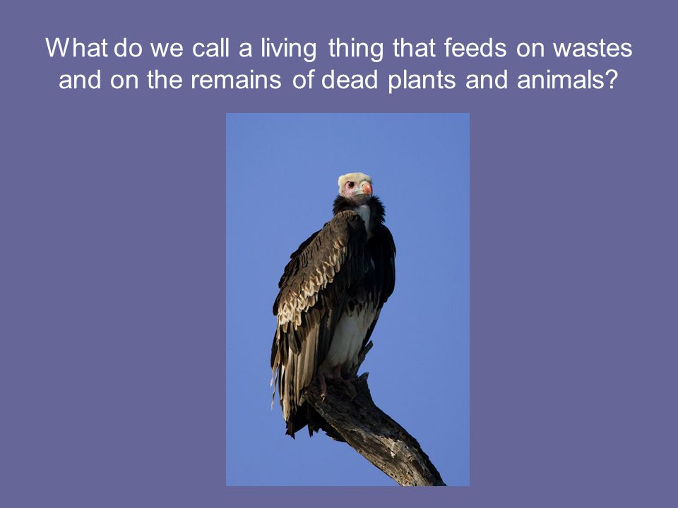 What do we call a living thing that feeds on wastes and on the remains of dead plants and animals