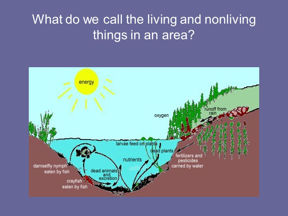 What do we call the living and nonliving things in an area