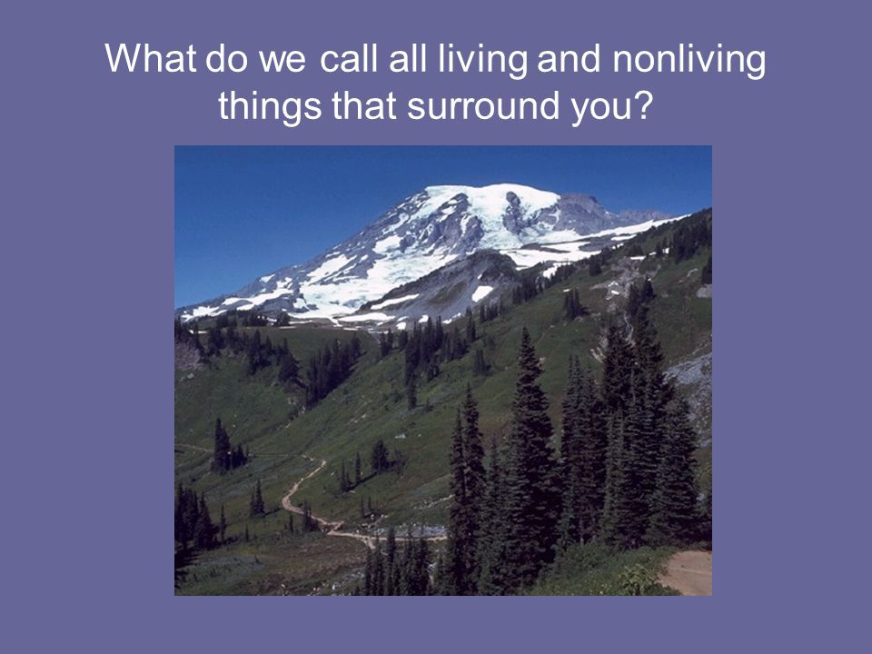 What do we call all living and nonliving things that surround you