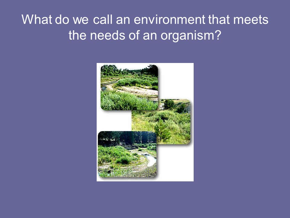 What do we call an environment that meets the needs of an organism