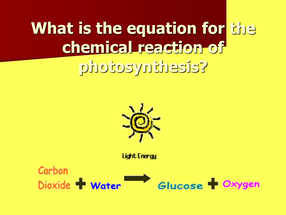 What is the equation for the chemical reaction of photosynthesis?
