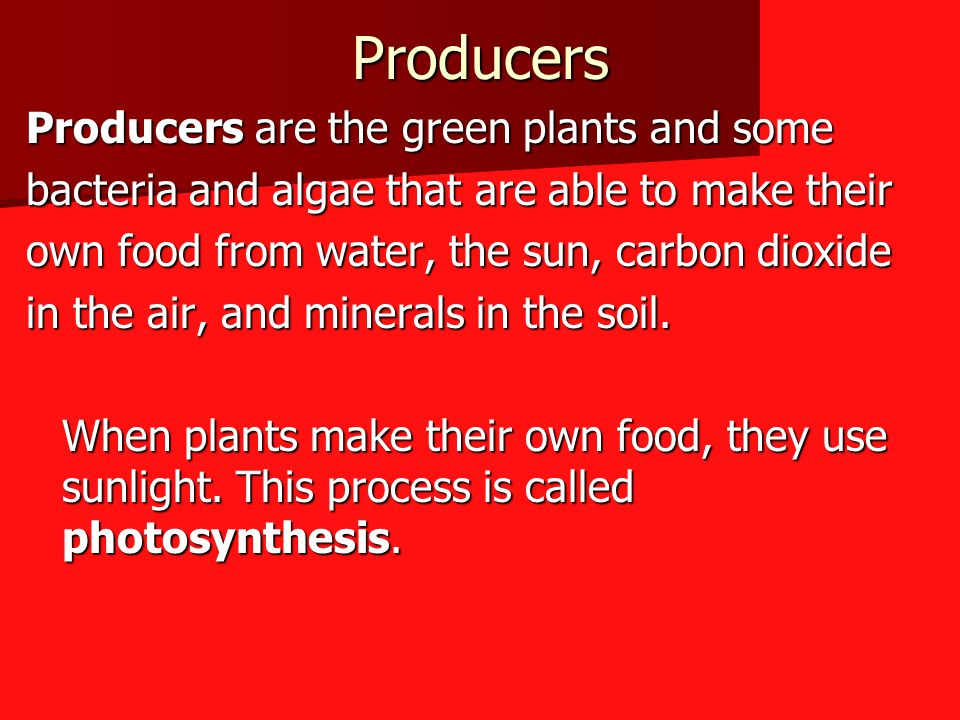 Producers Producers are the green plants and some bacteria and algae that are able to make their own food from water, the sun, carbon dioxide in the air, and minerals in the soil.