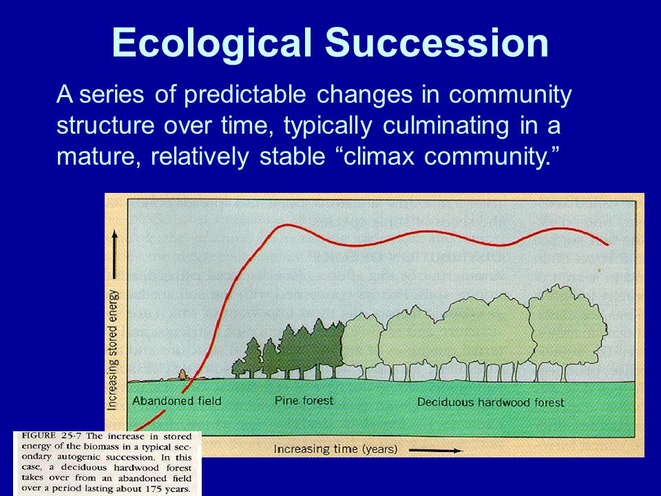 Ecological Succession A series of predictable changes in community structure over time, typically culminating in a mature, relatively stable climax community.