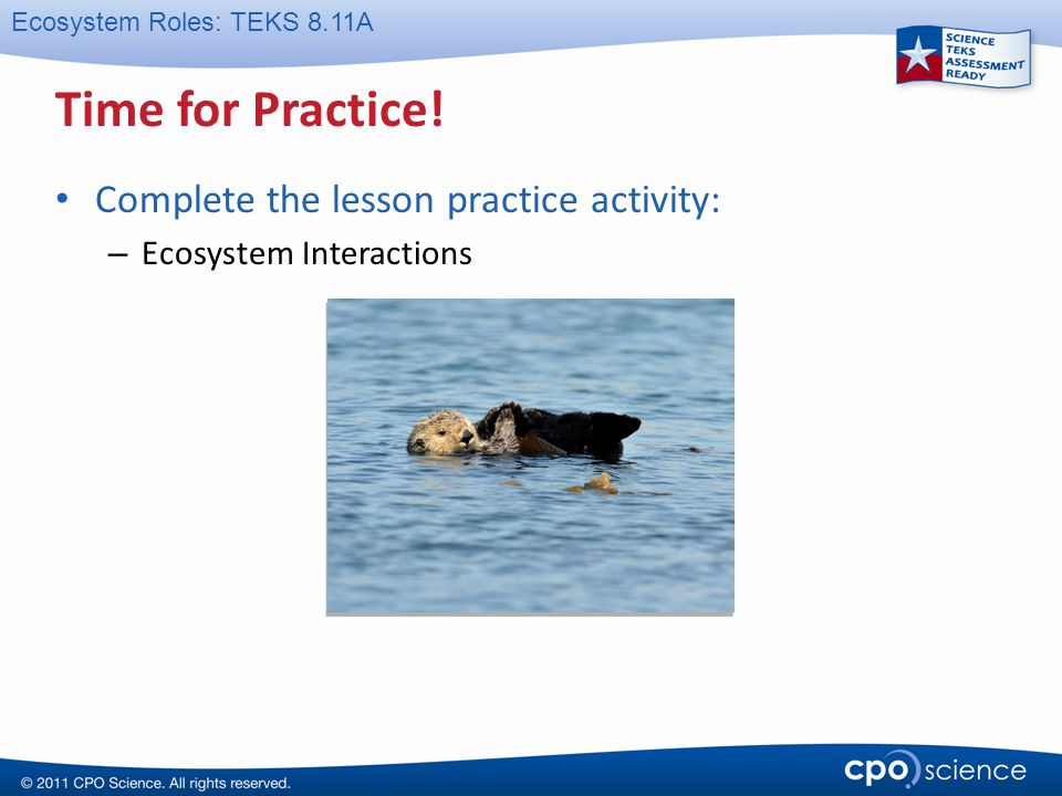 Ecosystem Roles: TEKS 8.11A Time for Practice! Complete the lesson practice activity: – Ecosystem Interactions