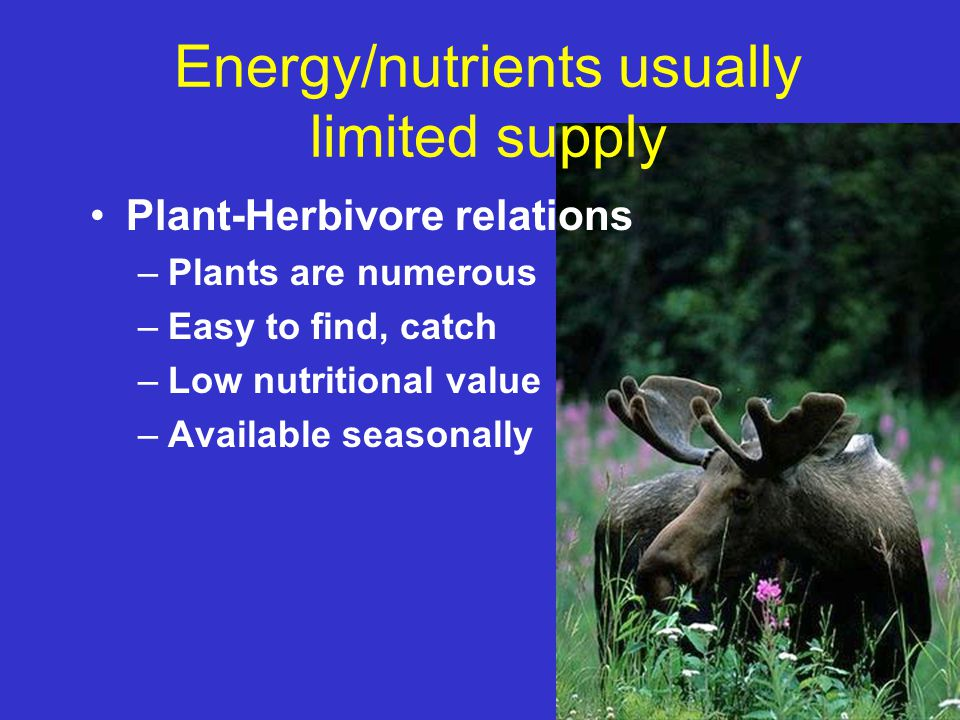 Energy/nutrients usually limited supply Plant-Herbivore relations –Plants are numerous –Easy to find, catch –Low nutritional value –Available seasonal