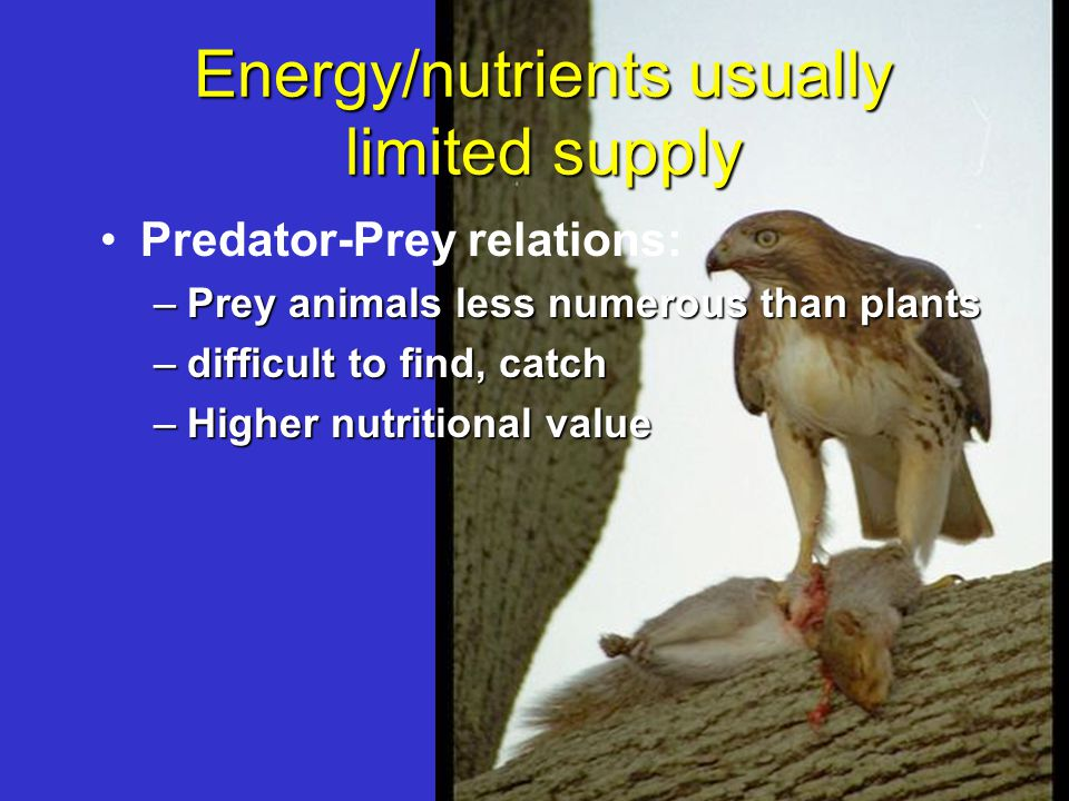 Energy/nutrients usually limited supply Predator-Prey relations: –Prey animals less numerous than plants –difficult to find, catch –Higher nutritional