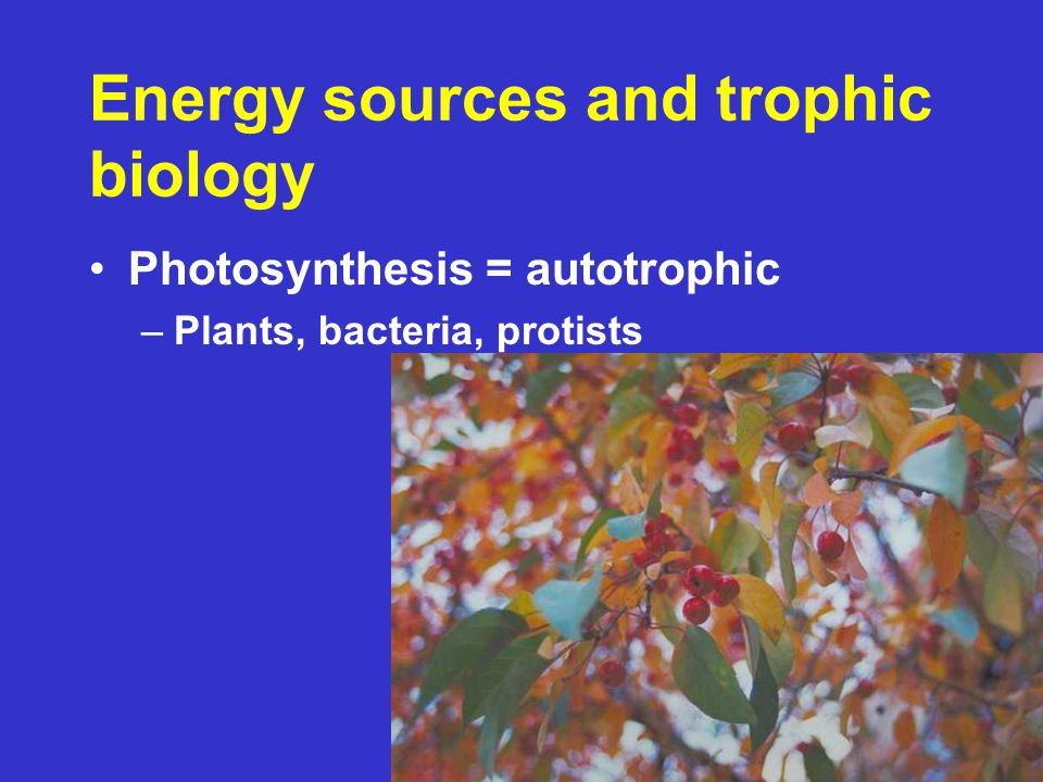 Photosynthesis = autotrophic –Plants, bacteria, protists Energy sources and trophic biology