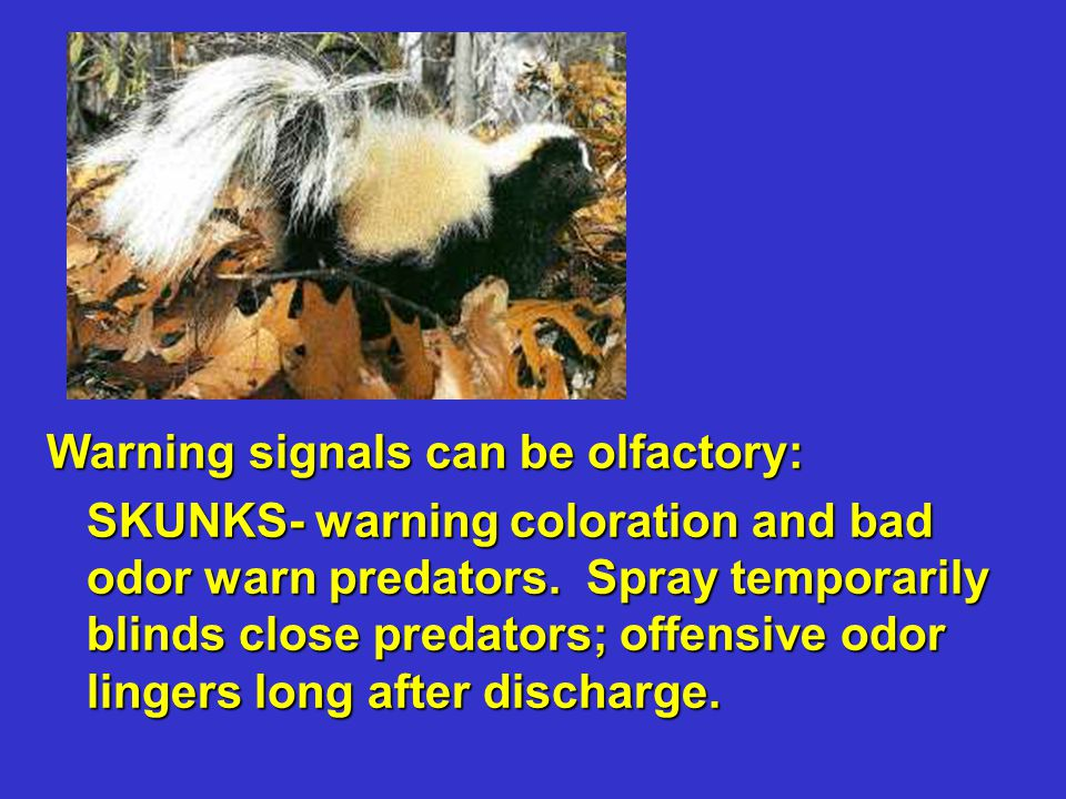 Warning signals can be olfactory: SKUNKS- warning coloration and bad odor warn predators. Spray temporarily blinds close predators; offensive odor lin
