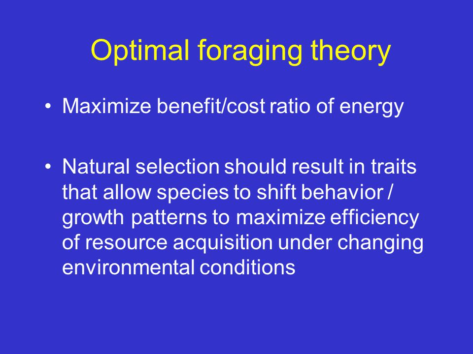 Optimal foraging theory Maximize benefit/cost ratio of energy Natural selection should result in traits that allow species to shift behavior / growth
