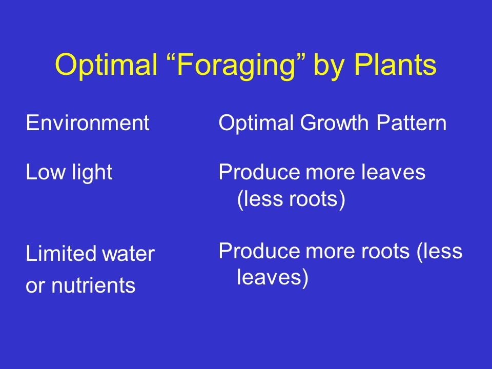 "Optimal ""Foraging"" by Plants Environment Low light Limited water or nutrients Optimal Growth Pattern Produce more leaves (less roots) Produce more roo"