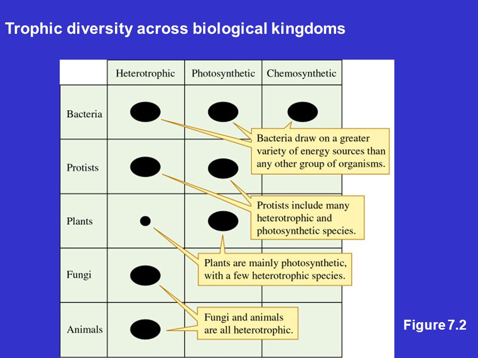 3 biochemical pathways for photosynthesis: C 3 In dry environments: –C 4 –CAM