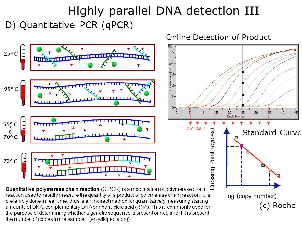 Highly parallel DNA detection III D) Quantitative PCR (qPCR) (c) Roche Online Detection of Product Standard Curve Quantitative polymerase chain reacti